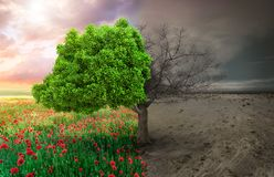 与树和气候改变的风景的生态概念 库存照片
