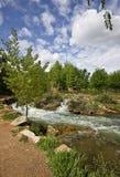 与树和河的风景 图库摄影
