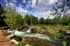 与树和河的风景 免版税库存图片
