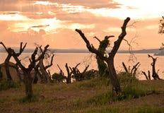与树和湖的全景 免版税库存图片