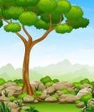 与树和石头的密林风景 免版税库存图片