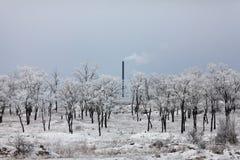 与树和管子的冬天风景 免版税图库摄影