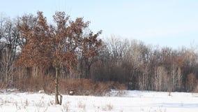 与树和篱芭的冬天风景在冬天 股票录像