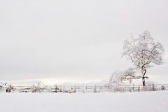 与树和篱芭的冬天风景 免版税库存图片