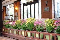 与树和花的美好的风景 免版税库存图片