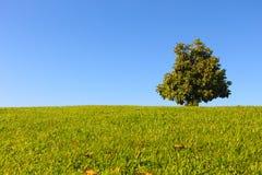 与树和蓝天的山 免版税图库摄影