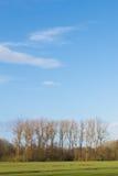 与树和蓝天的春天场面 免版税库存图片