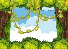 与树和藤的森林场面 皇族释放例证