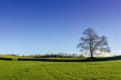 与树和门的一个冬天农村场面 免版税图库摄影