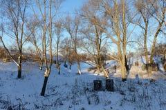 与树和随风飘飞的雪的晴朗的冬天风景 免版税库存照片