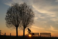 与树和骑自行车者silhouet的日出  图库摄影