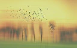 与树和鸟的抽象风景在黄色和绿色和橙色 免版税库存图片
