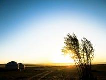 与树和Yurt的蒙古风景 免版税图库摄影