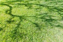 与树室外自然的背景的阴影的绿草领域 免版税库存照片