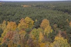 与树拉脱维亚的色的叶子的秋天背景 免版税图库摄影