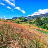 与树木丛生的小山和干草堆的美好的乡下风景在山的一个象草的农村领域的 图库摄影