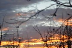 与树枝的美丽的日落天空 免版税库存图片