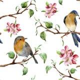 与树枝的水彩样式,鸟和苹果进展 与知更鸟redbreads的手画春天装饰品和 皇族释放例证