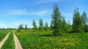与树桦树和乡下公路的全景风景 免版税库存照片