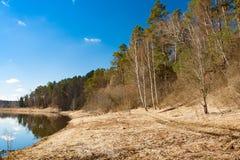 与树森林的春天风景海岸河的 图库摄影