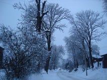 与树的一些天空 免版税图库摄影
