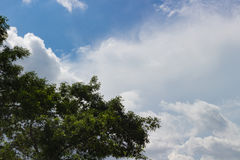 与树的云彩到左边 免版税库存照片