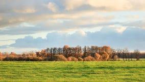 与树的农村风景在秋天颜色,蒂伦豪特,比利时 库存图片