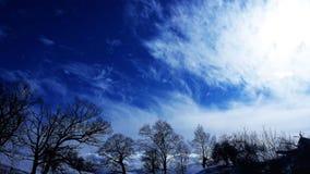 与树的冬天天空 免版税库存图片