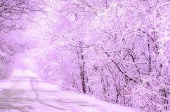 与树的冬天紫罗兰色风景 库存照片