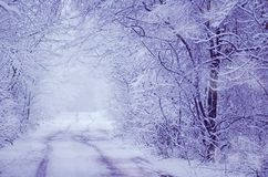 与树的冬天紫罗兰色风景 免版税图库摄影