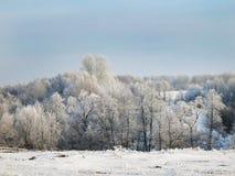 与树的冬天风景在雪和蓝天 免版税库存照片