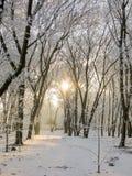 与树的冬天风景在雪在公园 免版税库存照片