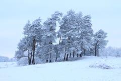 与树的冬天 图库摄影