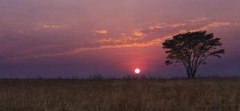 与树的冷的早晨日出,与紫色云彩的草 免版税库存照片