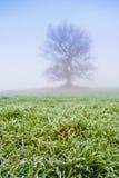 与树的冷的有薄雾的早晨 库存图片