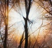 与树的剪影的自然风景反对明亮的秋天太阳的 库存图片