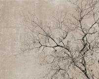 与树的剪影的葡萄酒明信片 免版税库存图片