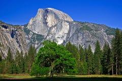 与树的半圆顶 免版税库存图片