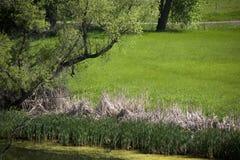 与树的夏天与小河的场面和vegetaion在前景 图库摄影