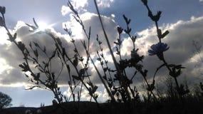 与树的天空 免版税库存照片