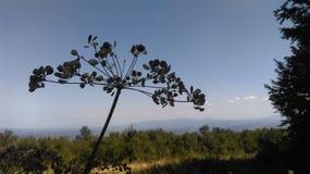 与树的天空 免版税库存图片