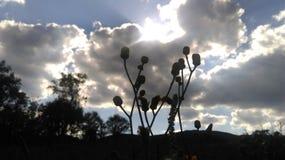 与树的天空 库存图片