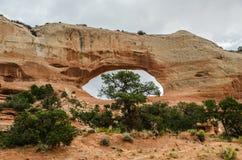 与树的威尔逊曲拱 库存照片