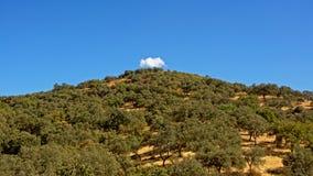 与树的小山在与蓝天和一朵白色蓬松云彩的一个晴天在上面 免版税库存照片