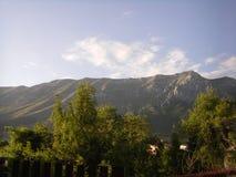 与树的山脉 免版税库存图片