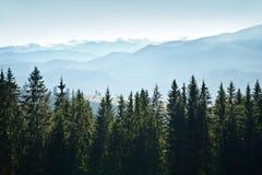 与树的山风景 免版税库存图片
