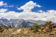与树的岩层,阿拉巴马小山,内华达山 免版税图库摄影