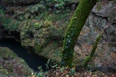 与树的峡谷在青苔和常春藤和流动河 免版税库存照片