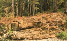 与树的峭壁面孔在上面 库存图片