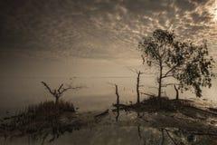 与树的日出天空在湖 免版税库存图片